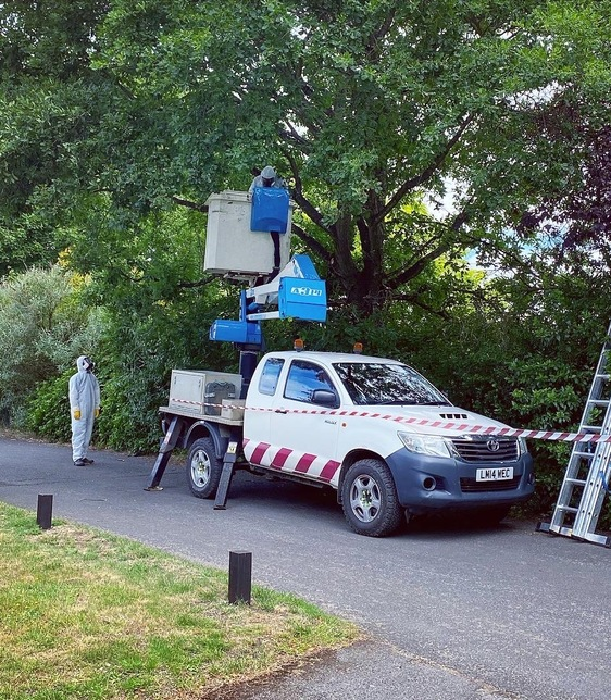 Oak Processionary Moth removal